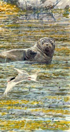 Otter seal tern