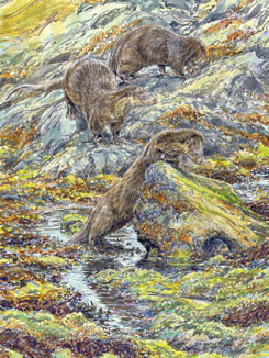 Otters three playingjpg