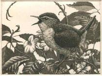 wlp-wren