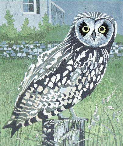 PW-owl